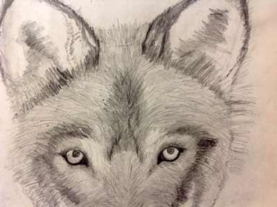 Zeichnen lernen ist Sehen lernen